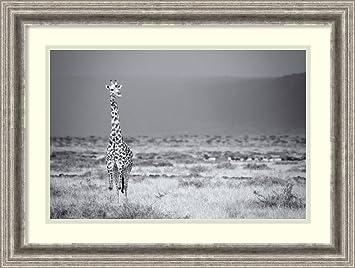 amazon com framed art print big boy by mark bridger posters prints