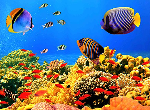 arts puzzles Jigsaw Puzzle Colorful Underwater World Corals Tropical Fish 500-Pieces by (Fish Wooden Big Jigsaw)