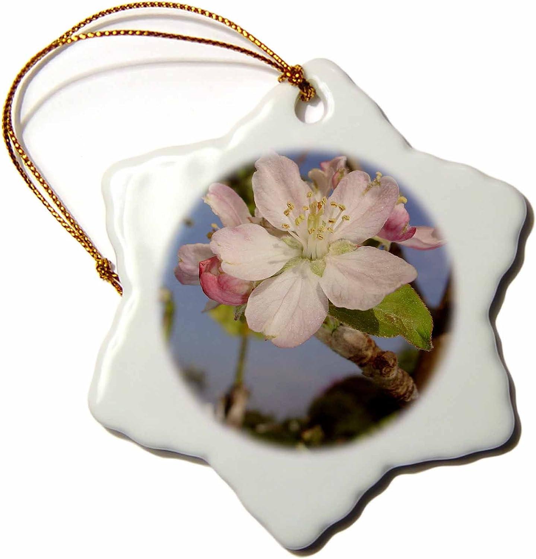 3dRose ORN_46787_1 Apple Blossom Apple, Apple Tree, Apples, Blossom, Blossoms, Fruit Tree, Pink Blossom Snowflake Porcelain Ornament, 3-Inch