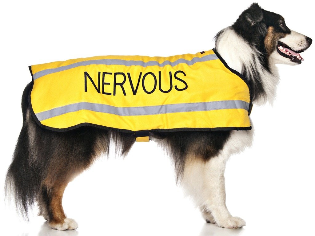 Yellow Colour Coded S M L Reflective Waterproof Fleece Lined Warm Dog Coats PREVENTS Accidents By Warning Others Of Your Dog In Advance Give Me Space S NERVOUS