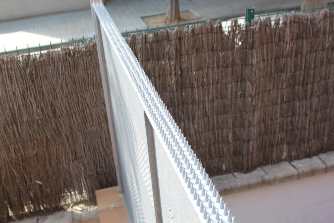 5 Mt Pinchos Anti-aves y Anti-gatos 10 Piezas de 50cm Polipropileno anti UV (Transparente): Amazon.es: Bricolaje y herramientas
