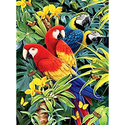 Ceaco Wild - Majestic Macaws 1000 Piece Puzzle: Toys & Games