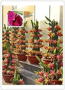 15 seeds /pack, Pitaya RED inside Red outside, Sweet Dragon Fruit, Pitaya Cactus