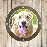 Cheap Petacc Dog Fence Window Clear Dome Window Durable Acrylic Peek Window for Backyard Fence or Dog House, Transparent