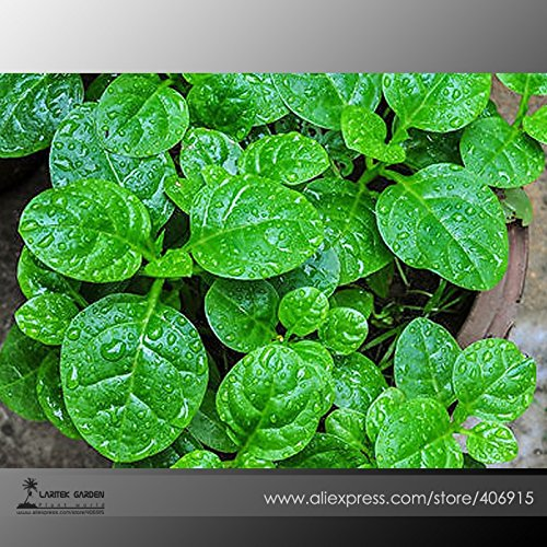 2018 Hot Sale Heirloom Green Malabar Spinach Vegetable Seeds, Professional Pack, 50 Seeds/Pack, Organic Vegetables E3391 (Organic Seed Petunia)