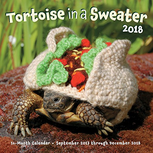 Tortoise in a Sweater 16-Month Calendar