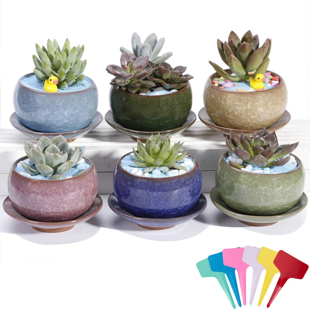 Casolly Ceramic Colorful Ice Crack Succulent Pots Flower Pot with Saucer Tray Drainage Hole 3.5 Inch- Pack of 6