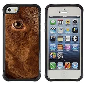 LASTONE PHONE CASE / Suave Silicona Caso Carcasa de Caucho Funda para Apple Iphone 5 / 5S / Golden Labrador Retriever Dog Puppy