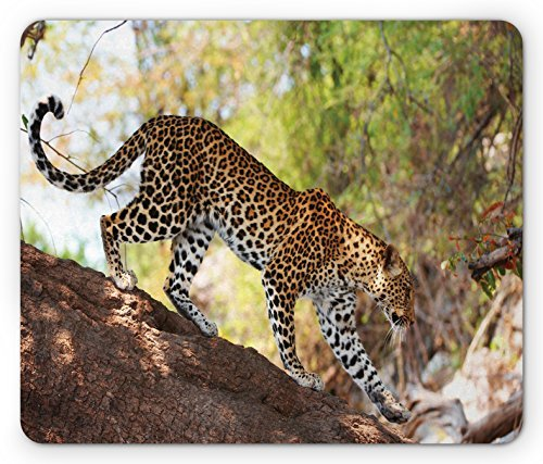 Zoo Mouse Pad Leopard Panthera Pantus on Tree Nature Reserve Botswana Carnivore Animal Rectangle Non-Slip Rubber Mousepad, Green Pale Brown White -