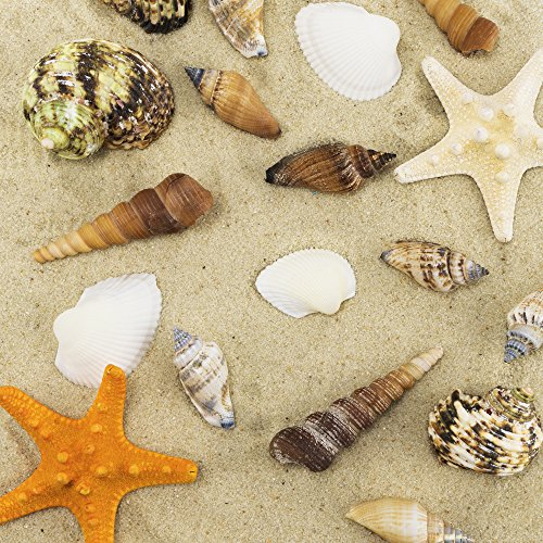 CYS EXCEL Sea Shells Mixed Colorful Beach Seashells, Natural Colored Starfish Accents for Nautical Decor,Home Decor, Beach Theme Party Wedding Decoration, Gifts and Vase Fillers (50 - 60 Seashells)