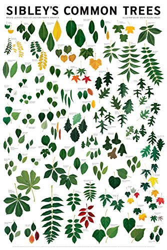 (Sibley's Common Trees of Eastern North America, 24x36)