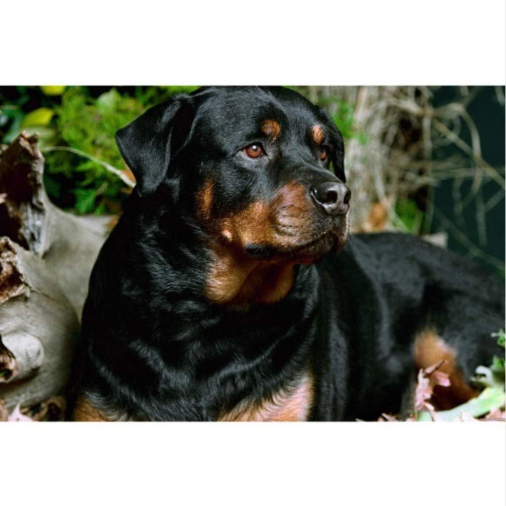 5D Pintura Diamante Animal Rottweiler Perro Taladro Completo Bordado De Punto De Cruz Rhinestones Decoraci/ón De La Boda,40x50cm