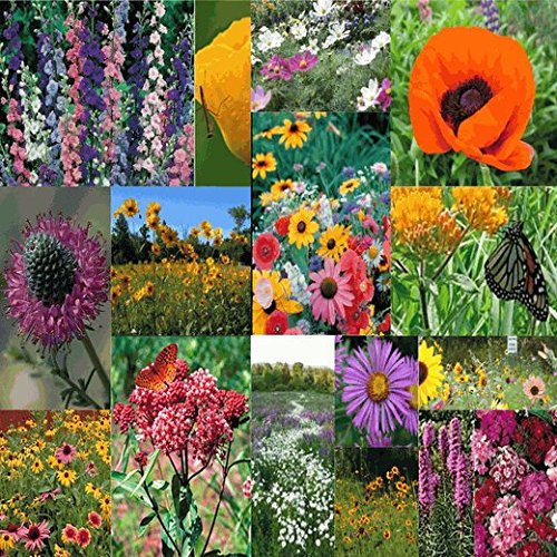 Deluxe Pollinator Wildflower Seed Mix - 1/4 Lb