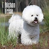 Bichon Frise Dogs Wall Calendar 2017 {jg} Best Holiday Gift Ideas - Great for mom, dad, sister, brother, grandparents, , grandchildren, grandma, gay, lgbtq.