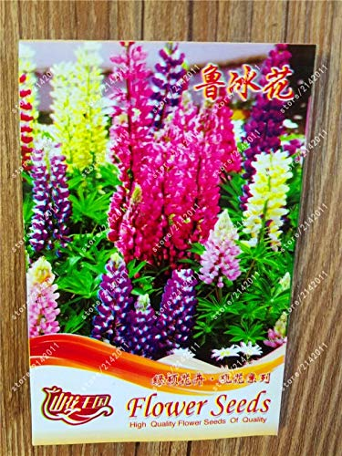 Seed True Lupine Wildflower Annual Succulent Ground Cover Flower Perennial Potted Plant 100% Real Factory Package