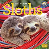 img - for Sloths Wall Calendar 2018 book / textbook / text book