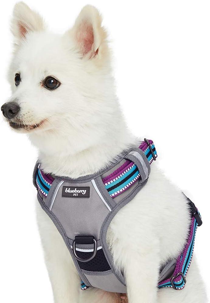 Dog wearing a no-pull dog harness