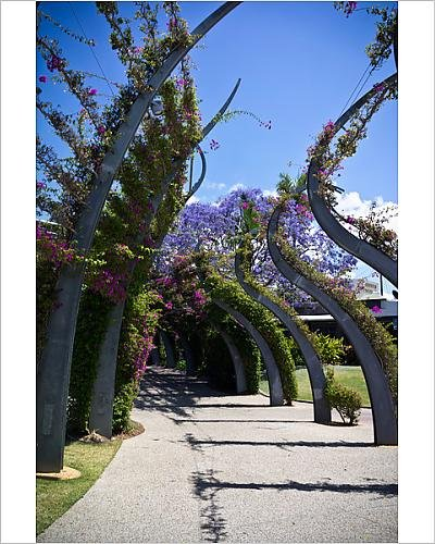 photographic-print-of-the-arbour-brisbane