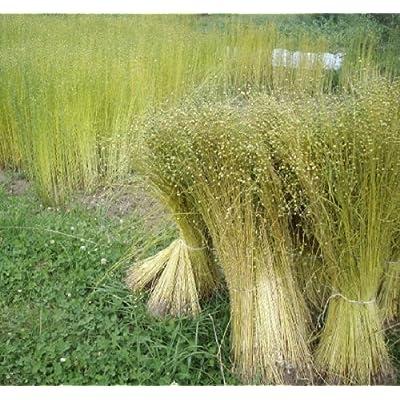 HeirloomSupplySuccess 750 Heirloom Flax Seeds : Garden & Outdoor