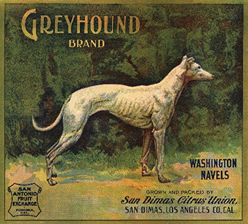 Vintage Union Label (San Dimas, California - Greyhound Brand - Citrus Crate Vintage Label (16x24 SIGNED Print Master Giclee Print w/ Certificate of Authenticity - Wall Decor Travel Poster))