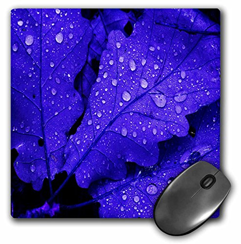 Price comparison product image 3dRose LLC 8 x 8 x 0.25 Inches Mouse Pad, Three Blue Leaves Water Drops (mp_15466_1)