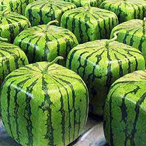 (Square Watermelons Seeds, 50 Pcs Rare Geometric Sweet Fruit Seeds Farm Garden Fruit)