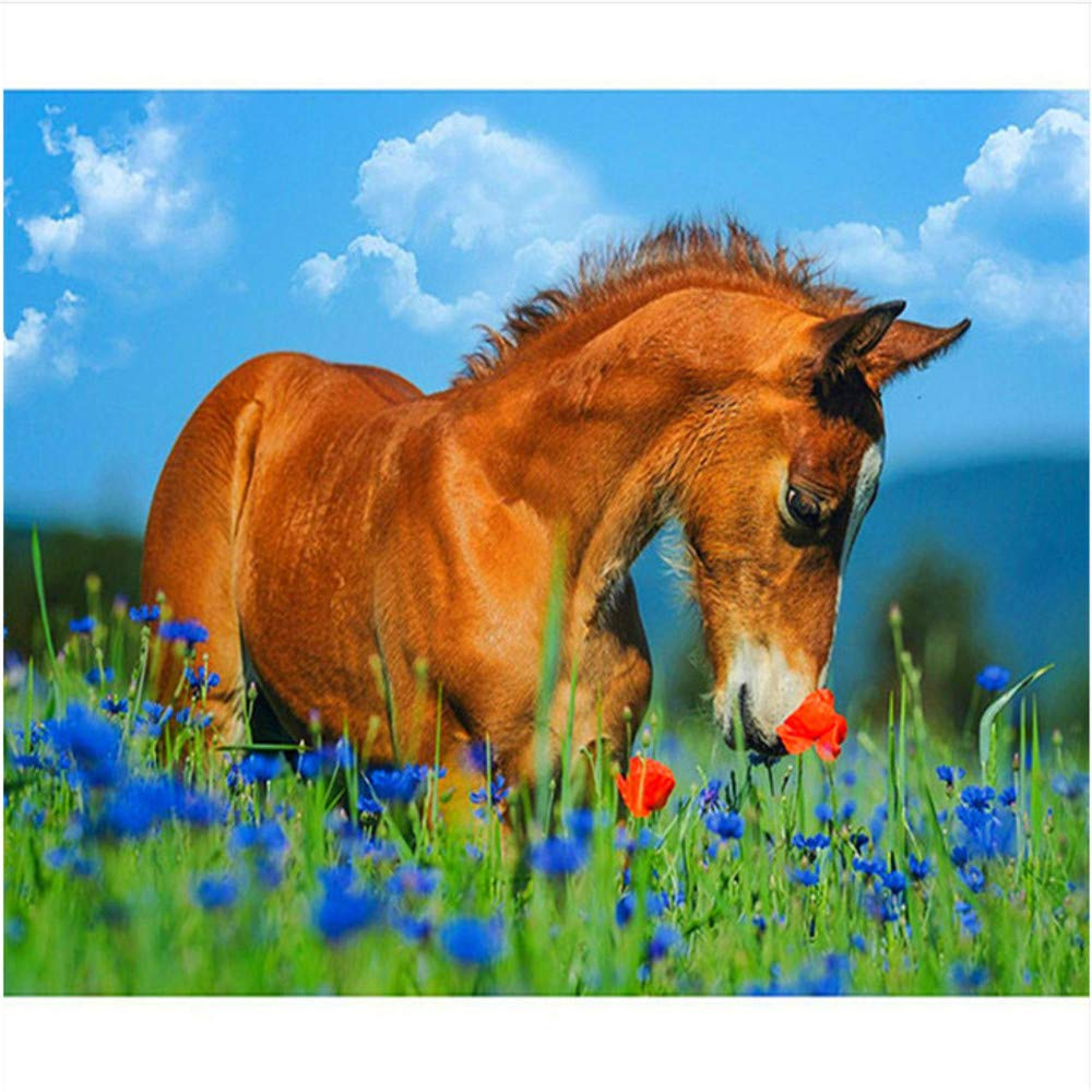 Malen Nach Zahlen Set Set Set Malen Nach Zahlen Für Junior-Pferd Und Lavendel Für Erwachsene Home Decor DIY-Rahmen 40X50Cm B07PKJ2ZR1   Großartig  d72fac