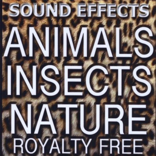 Animal Sound Fx, Insects And Nature
