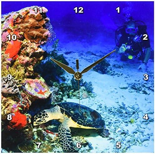 3dRose DPP_85183_1 Hawksbill Turtle, Scuba Diver, Micronesia-Oc16 Sws0045-Stuart Westmorland-Wall Clock, 10 by 10-Inch