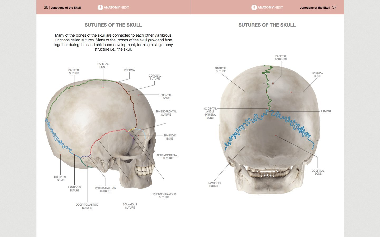Visual Guide To The Anatomy Of The Skull Reinis Jansons