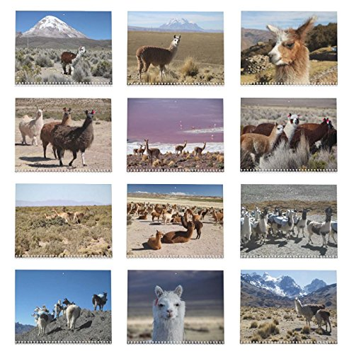 Llama Calendar - Best South America Images in Snow Capped Andes Mountains of Bolivia and Peru Photo #9