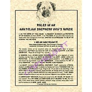 Rules In An Anatolian Shepherd Dog HOuse 23