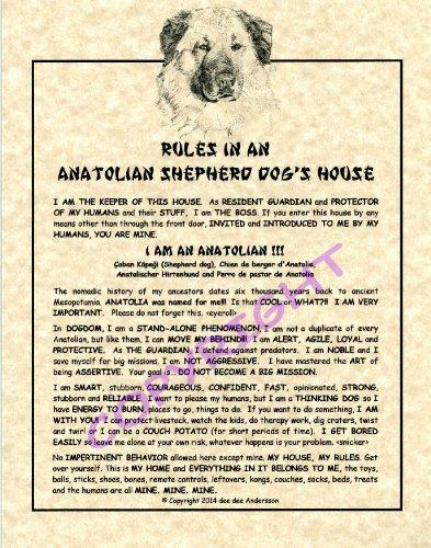 Rules In An Anatolian Shepherd Dog HOuse
