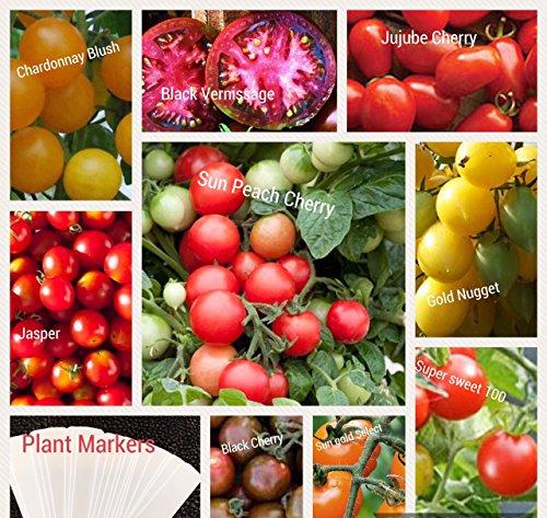 variety tomato seed - 8