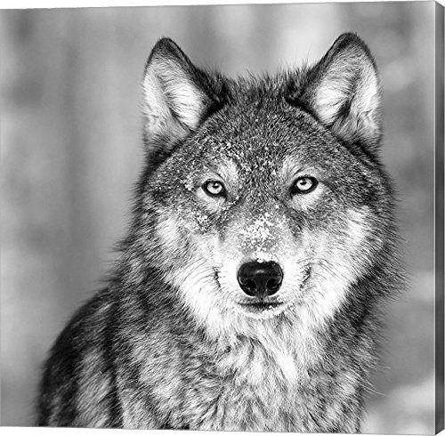 Wolf by PhotoINC Studio Canvas Art Wall Picture, Gallery Wrap