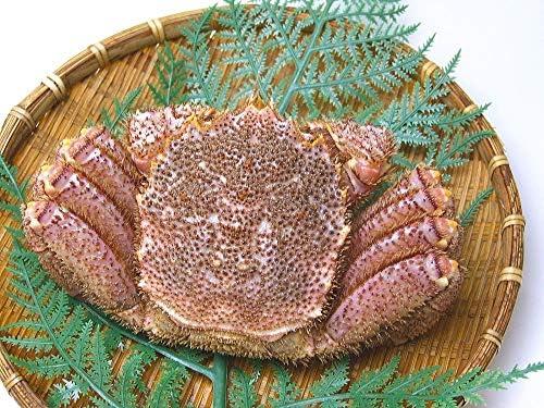 北海道産 活毛蟹 500g 1尾