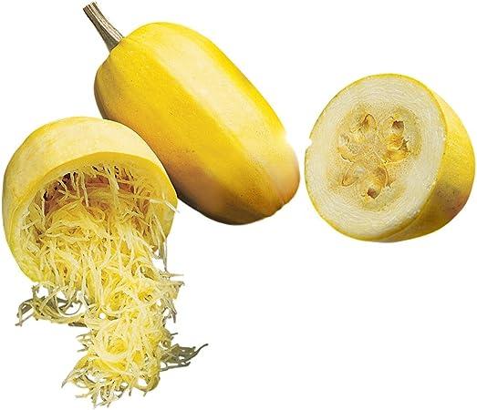 Squash Winter Spaghetti Non GMO Heirloom Garden Vegetable Seeds Sow No GMO® USA