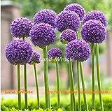 Yongyut 100 Seeds, Blue-violet Allium Flower Seed, 'Gladiator' Variety Giant Onion Ornamental Bonsai Plants