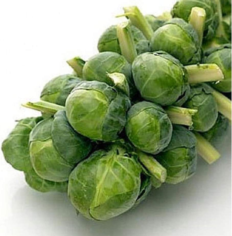 David's Garden Seeds Brussels Sprouts Long Island Improved 1443 (Green) 100 Non-GMO, Heirloom Seeds