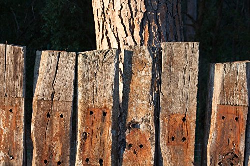 Home Comforts Peel-n-Stick Poster of Fence Wood Faces Railway Sleepers Limit Poster 24x16 Adhesive Sticker Poster Print