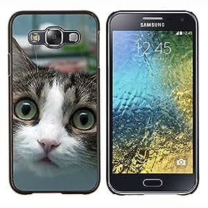 TECHCASE---Cubierta de la caja de protección para la piel dura ** Samsung Galaxy E5 E500 ** --Wirehair americano Shorthair británico Cat