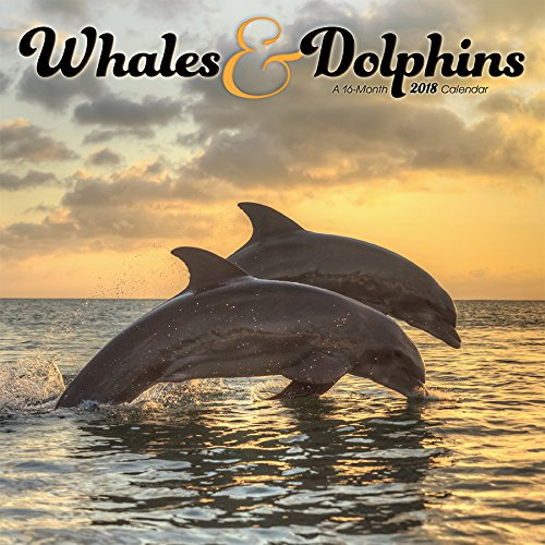 Whales & Dolphins 2018 Wall Calendar