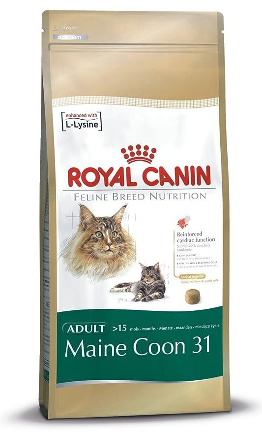 Royal Canin Maine Coon 31 gatos adultos gato seco alimentos equilibrados y completos comida para gato