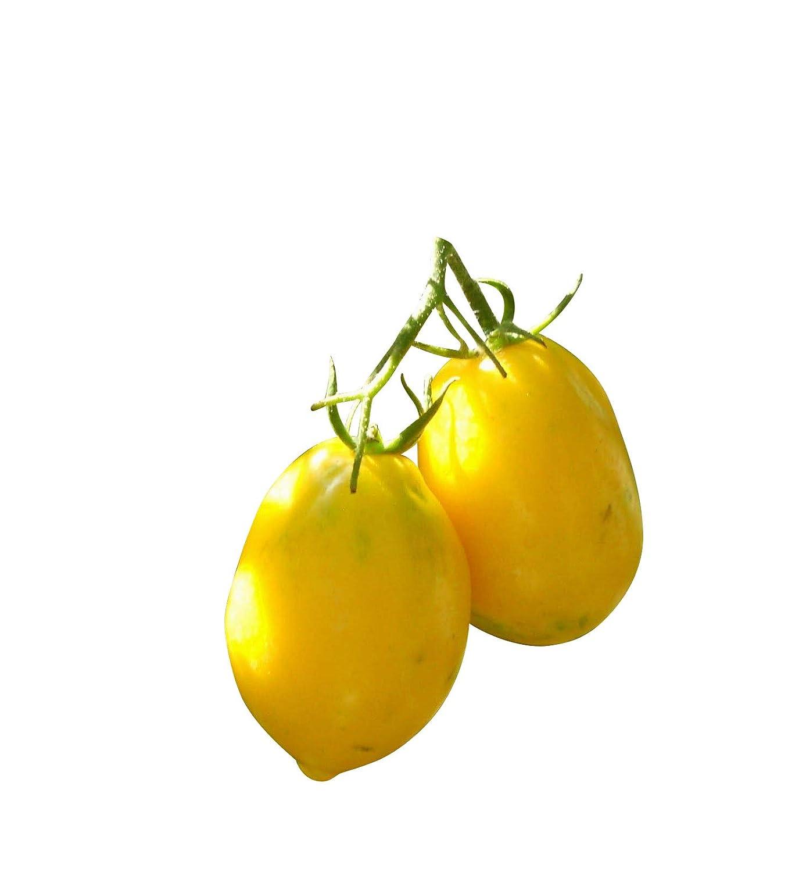 Zitronen Tomate -Plum Lemon- 10 Samen -Sehr Robust- *AUS RUSSLAND* Samenchilishop