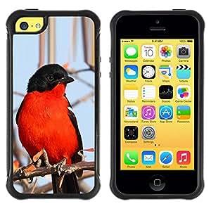 Suave TPU Caso Carcasa de Caucho Funda para Apple Iphone 5C / red blue black winter nature branch tree / STRONG