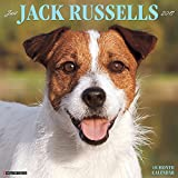 Just Jack Russells 2017 Wall Calendar (Dog Breed Calendars)
