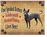 Spoiled Rotten Xoloitzcuintli Mexican Hairless Dog Puzzle with Photo Tin (551 pc.)