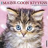 Maine Coon Kittens 2020 Wall Calendar
