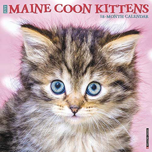 - Maine Coon Kittens 2020 Wall Calendar