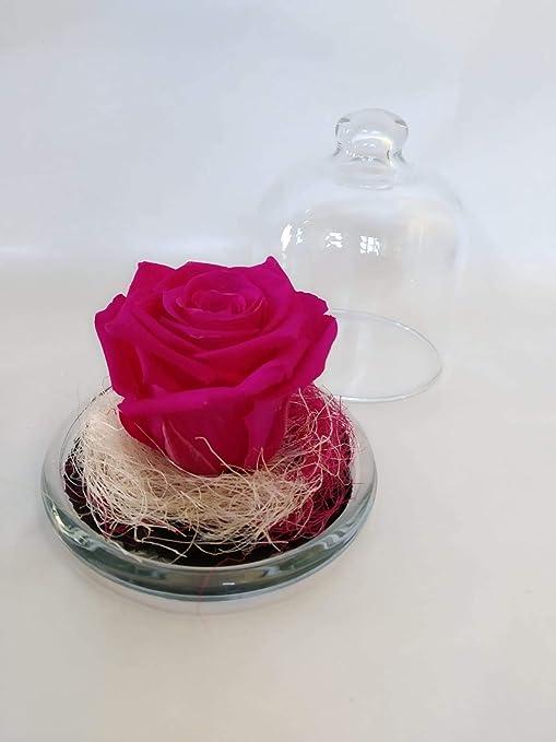 Rosa preservada Fucsia. Gratis TU ENVÍO. Rosa eterna Fucsia tamaño ...